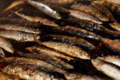 Grilled sardines Royalty Free Stock Photos