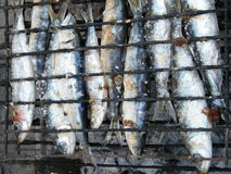 Grilled sardines. Closup of grilled sardines on the BBQ Stock Photography