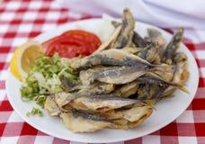 Grilled sardines Stock Image