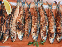 Grilled sardines. Eating Grilled sardines Stock Photos