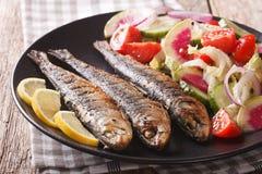 Grilled sardines with fresh salad of cucumber, radish, tomato, o Royalty Free Stock Image
