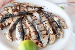 Grilled sardines Stock Images