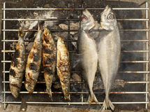 Grilled sardines and mackerel. Four sardines and two mackerel grilling on an outdoor charcoal grill royalty free stock photos