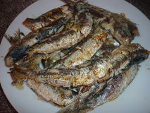 Grilled sardines. Moroccan grilled sardines in tangier city Royalty Free Stock Photography