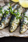 Grilled Sardines Wrapped in Paper Royalty Free Stock Image