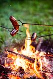 Grilled sausages above the campfire Royalty Free Stock Photo