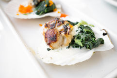 Grilled Scallop and Spinach stock image