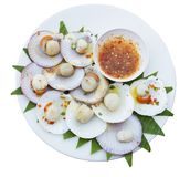Grilled scallops with butter isolated on whitebackground include clipgg path royalty free stock photo