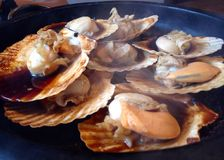 Grilled scallops serve on hot pan. With soyu sauce and full of Stock Image