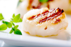 Grilled scallops with thyme leafs Stock Images