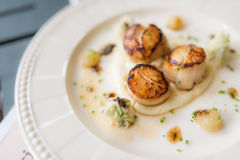 Grilled scallops Royalty Free Stock Image