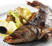 Grilled Sea Bass royalty free stock image