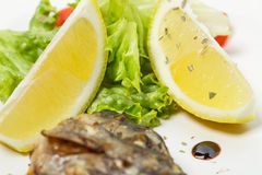 Grilled sea bass closeup. Stock Images