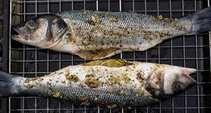 Grilled Sea Bass Royalty Free Stock Images