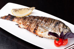 Grilled Sea Bream Stock Photos