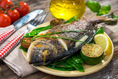 Grilled sea bream fish Royalty Free Stock Photo
