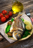 Grilled sea bream fish Stock Images