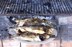 Grilled sea bream on plate royalty free stock photo