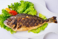 Grilled sea fish from above.Sea brem. Stock Image