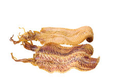 Grilled sea food dried squid, the most favor snack Stock Image