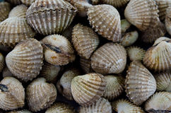 Grilled sea shell Stock Image