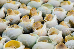 Grilled Sea snails at Taiwan Stock Photo