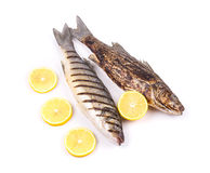 Grilled seabass fish Stock Images