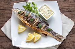 Grilled seabass on the plate Stock Images