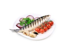 Grilled seabass on plate with tomatoes. Stock Image
