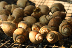 Grilled shell, spotted babylon, seafood Royalty Free Stock Photography
