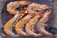 Grilled shrimp arranged on stove Stock Images