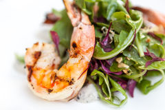 Grilled shrimp on mixed greens Royalty Free Stock Photos