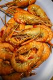 Grilled Shrimp Put on a beautiful ceramic plate. royalty free stock image