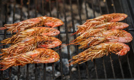 Grilled shrimps. Delicious seafood appetizer Stock Photos
