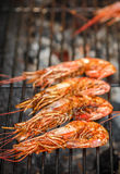 Grilled shrimps. Delicious seafood appetizer Royalty Free Stock Images