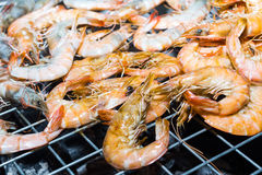 Grilled shrimps Stock Images