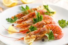Grilled shrimps with spice, lemon and greenery. Grilled seafood. Grilled shrimps with spice, lemon and greenery on white plate. Grilled seafood royalty free stock image