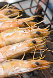Grilled Shrimps on Stove. Royalty Free Stock Images