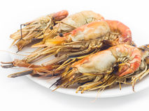 Grilled shrimps on the white plate Stock Photo