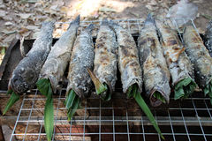 Grilled snake-head fishes Stock Photos