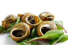 Grilled snales in shells on bed of beetroot leaves. White backgr royalty free stock images