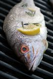 Grilled Snapper Royalty Free Stock Photos
