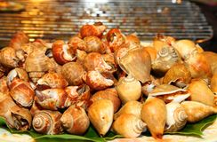 Grilled Spotted babylon shell on the banana leaf Royalty Free Stock Photos