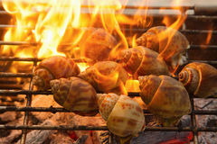 Grilled spotted babylon shell  on flaming Royalty Free Stock Image