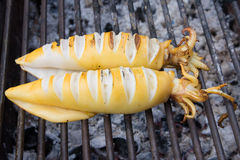 Grilled squid Royalty Free Stock Photography