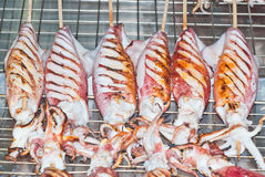 Grilled squid Royalty Free Stock Images
