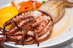 Grilled Squid On Plate. Delicious grilled Calamari squid on plate Royalty Free Stock Photography