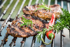 Grilled steak with chilli and rosemary. On old grill Stock Image