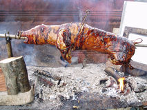 Grilled suckling pigs Royalty Free Stock Photography