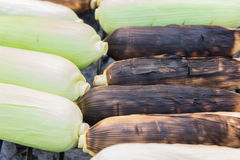 Grilled sweet corn on the charcoal stove.sensitive focus Royalty Free Stock Photo